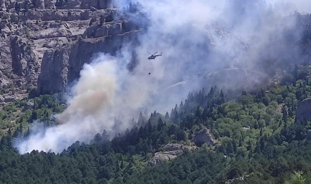 Feke'de orman yangını