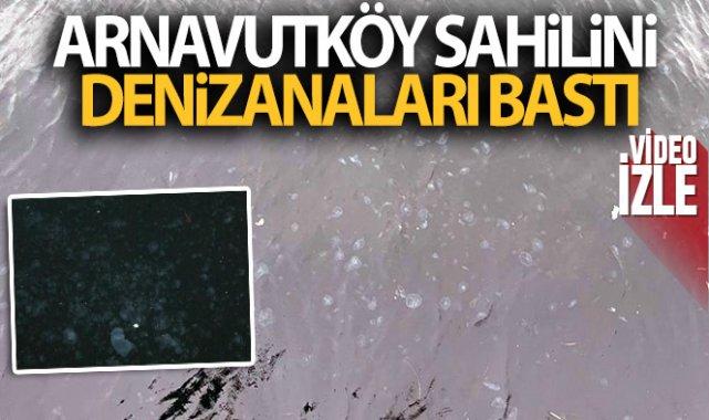 Arnavutköy sahilini denizanaları bastı!